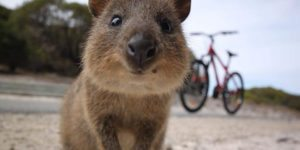 rottnest-island-things -to-do-perth