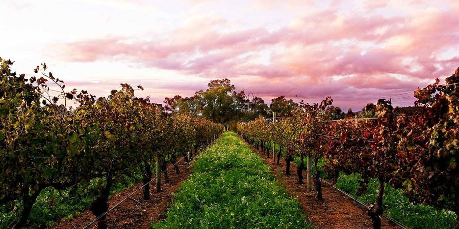 Swan Valley Tourist Attractions Perth